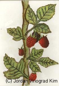JordanKim_Raspberry