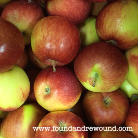 Empire apples harvest