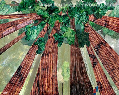 August Redwoods