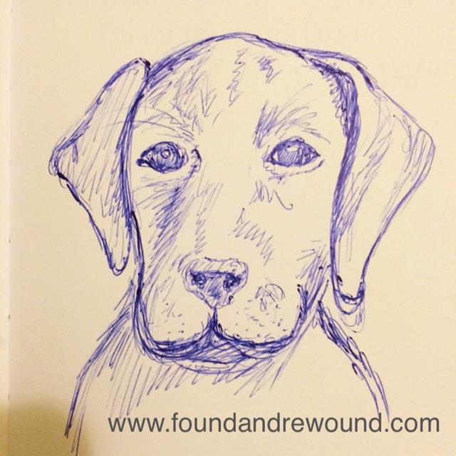 Jordan Kim lab puppy sketch
