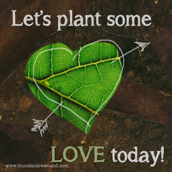 jordan Kim Love note seed plant love