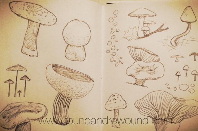Jordan Kim mushroom art sketches sketchbook shared
